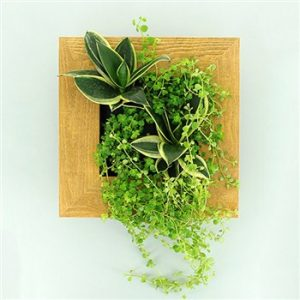 Tableau Végétal Wallflower © Truffaut -